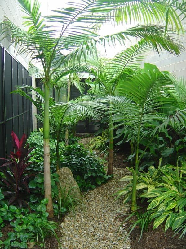 Envirogreenery interior plants office plants for for Indoor garden design pictures