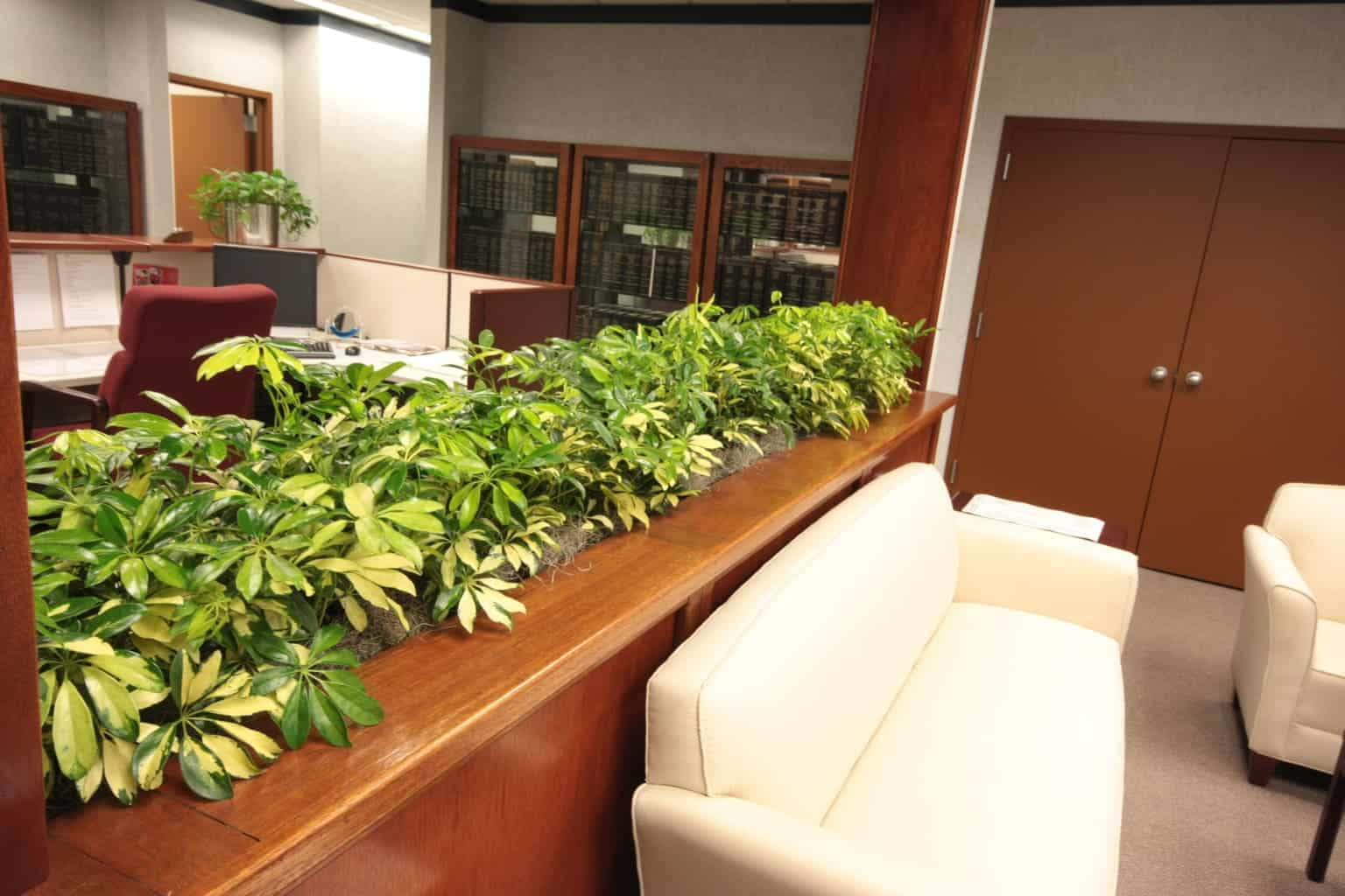 Envirogreenery interior plants office plants for Best small office plants