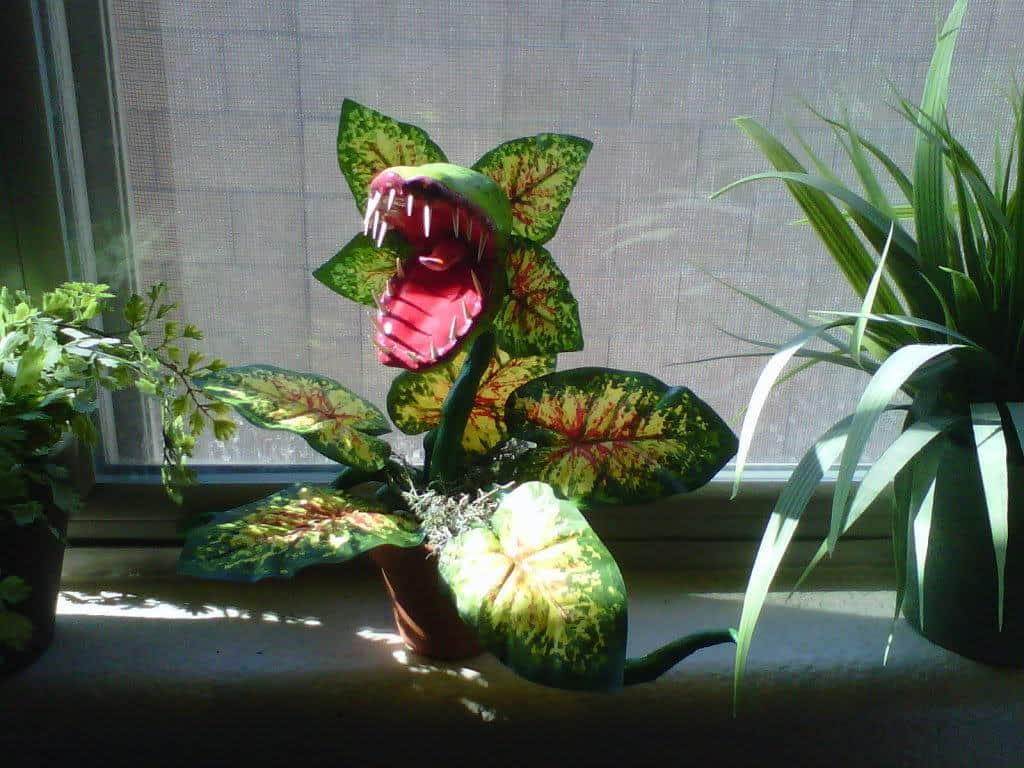 attack plant