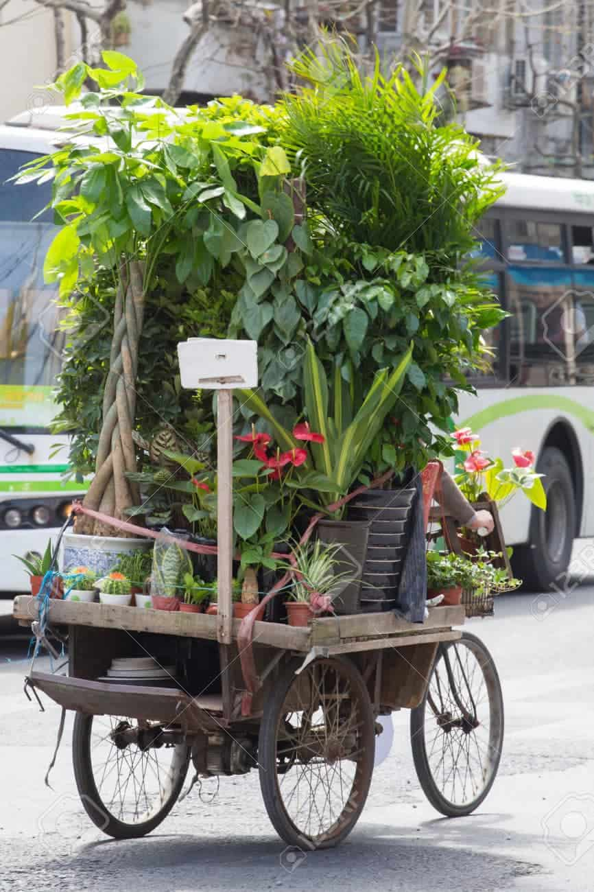 A man cycling and carrying a lot of flowers and plants on his bicycle in the street of Shanghai, China 3 April 2013.