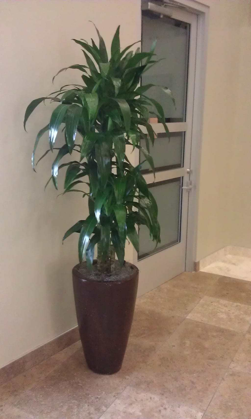 Wellesley ma interior landscaping and office plants - Tall office plants ...
