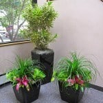 Southborough Indoor Plant Trio