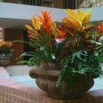 Green Flowering Plants Lexington