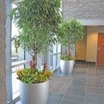 Westborough MA Plants Ca