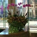 Orchids - Interior Plant Services
