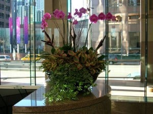 Orchids - Interior Plant Services