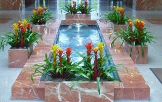 Plants - Houseplant
