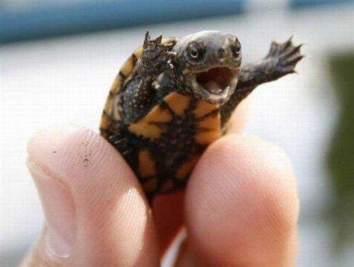 Turtle - Reptile