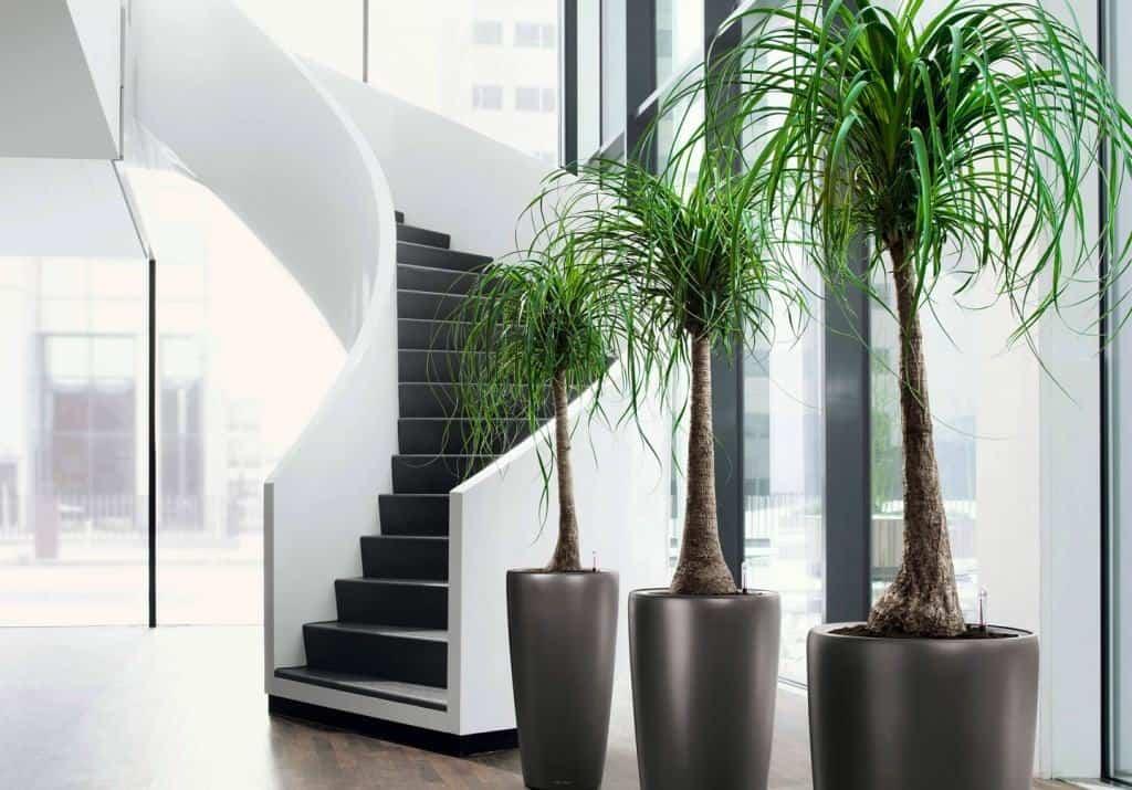 Houseplant - Plants
