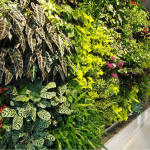 Living wall of plants in Somerville, MA