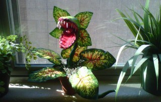 Carnivorous plant - Plants