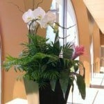 orchid flowering plant display in boston ma