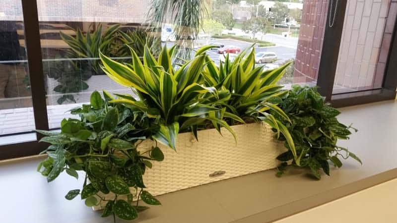 Window planter box in arlington massachusetts