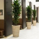 matching planters in a hotel in bedford massachusetts