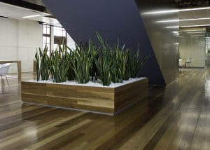 large planter with snake plants and white rocks in a cambridge company
