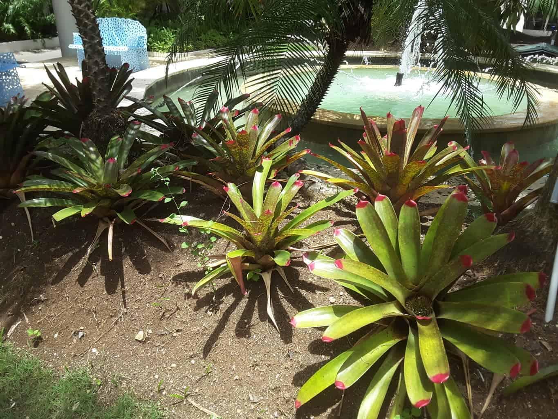 Bromeliads - Plants