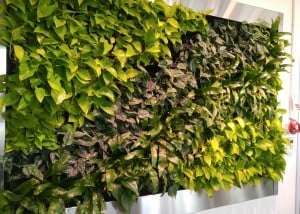 Burlington interior green plant wall