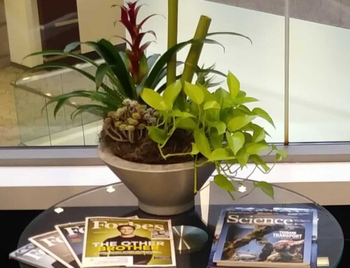 Framingham MA: Seasonal Flowering Office Plants