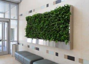 green plant wall in a condominium in cambridge massachusetts