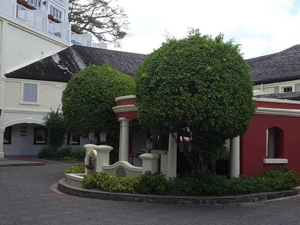 Tree - Plants
