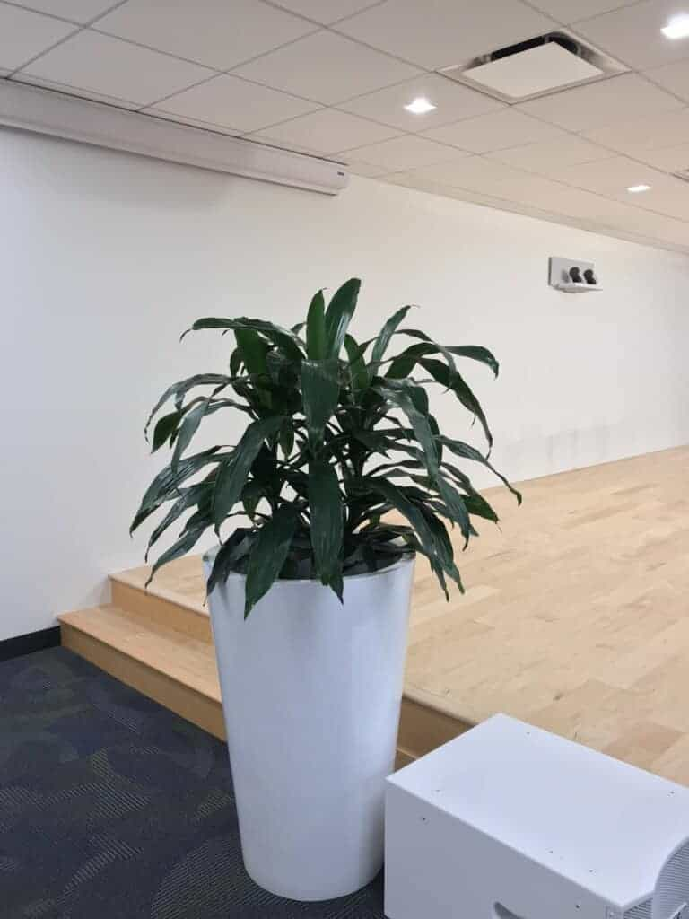 a janet craig plant in a company in waltham ma