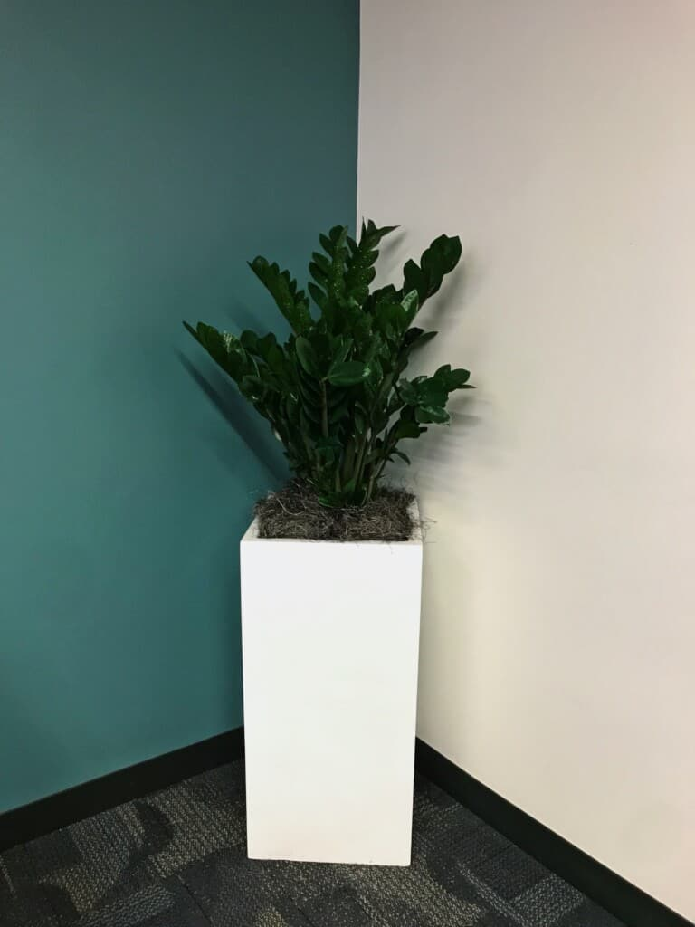 Tall white rectangle planter in Waltham MA