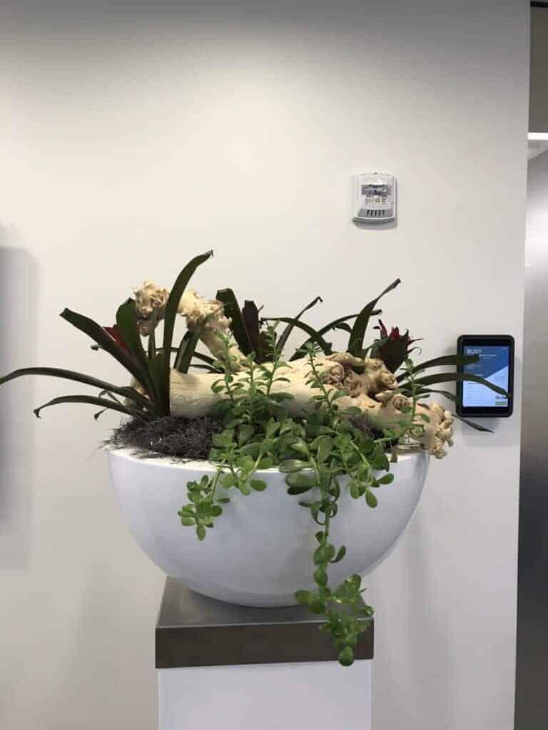 A custom designed plant display in Waltham ma