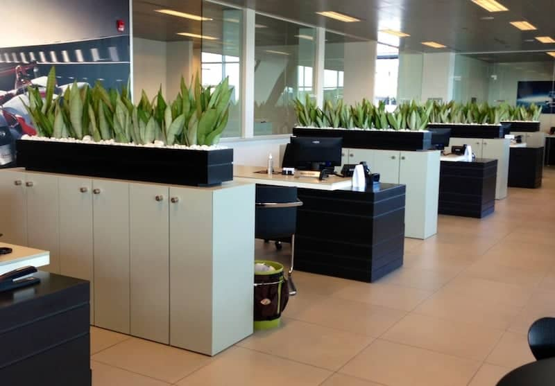 trendy snake plants in rectangle planters in beverly ma