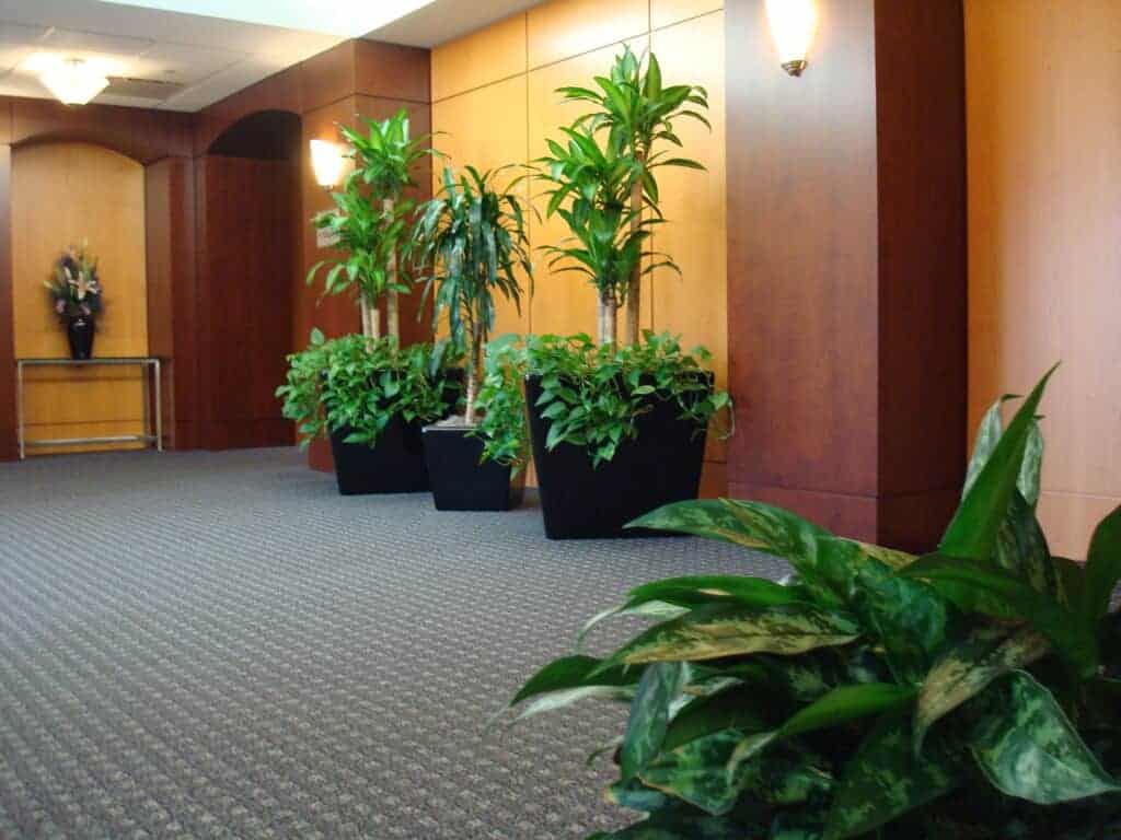 large plants in a lobby in dedham massachusetts