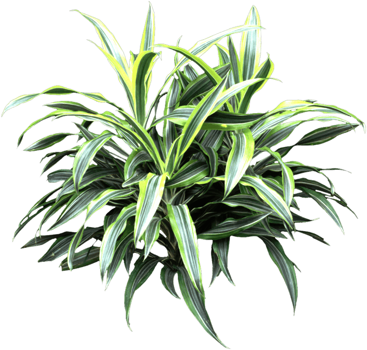 Leaf - Houseplant