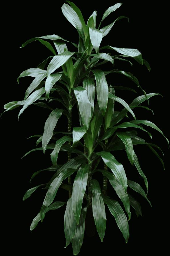 Plant stem - Plants