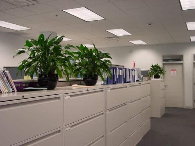 Filing cabinet plants displayed in sequence in watertown company