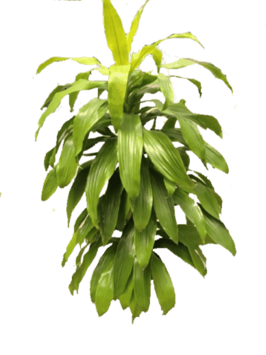 Plants - Houseplant
