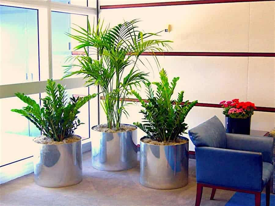 A trio of plants in an office