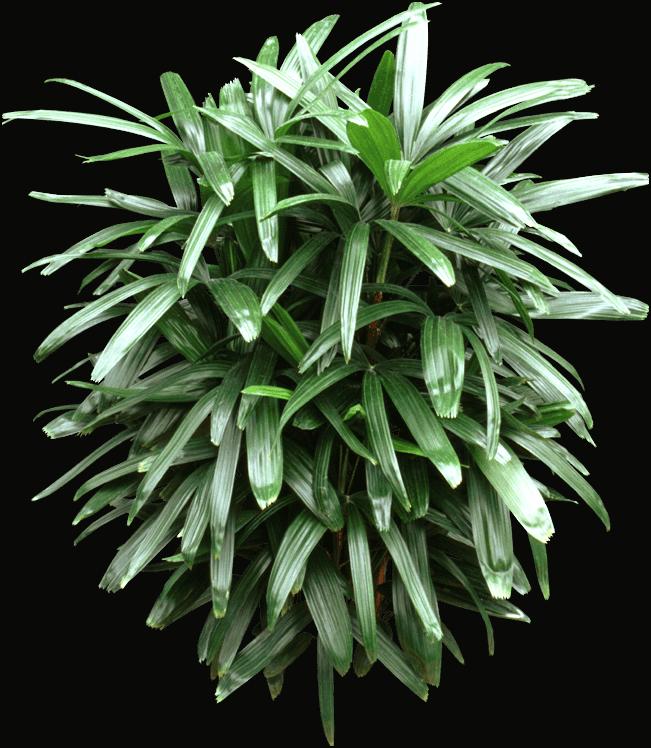 Plants - Leaf