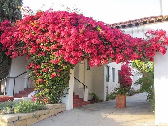 flowering plant hedge