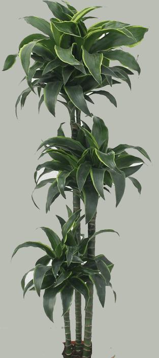 Leaf - Plants