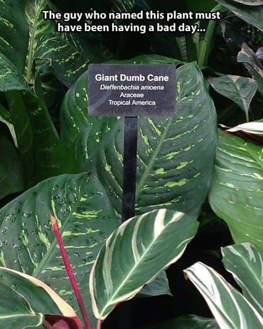 Plants - Humour