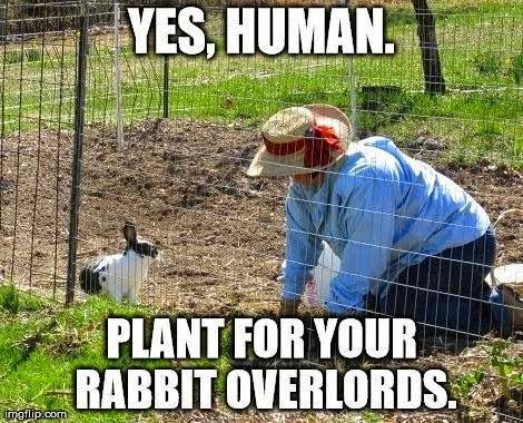 Gardening Rabbits and Humans