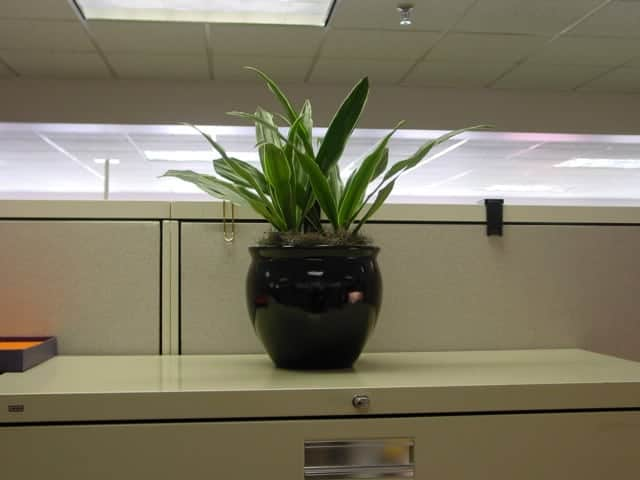 Houseplant - Flowerpot