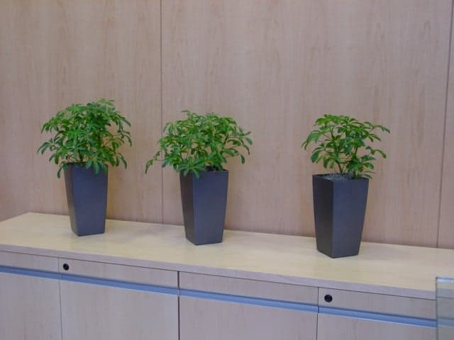small 4 inch diameter plants arranged neatly on a cabinet in southborough massachusetts