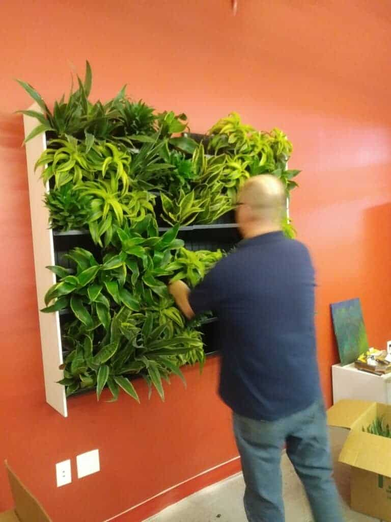 living plant wall installation