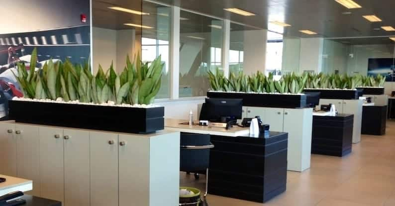 snake planters on file cabinets in massachusetts