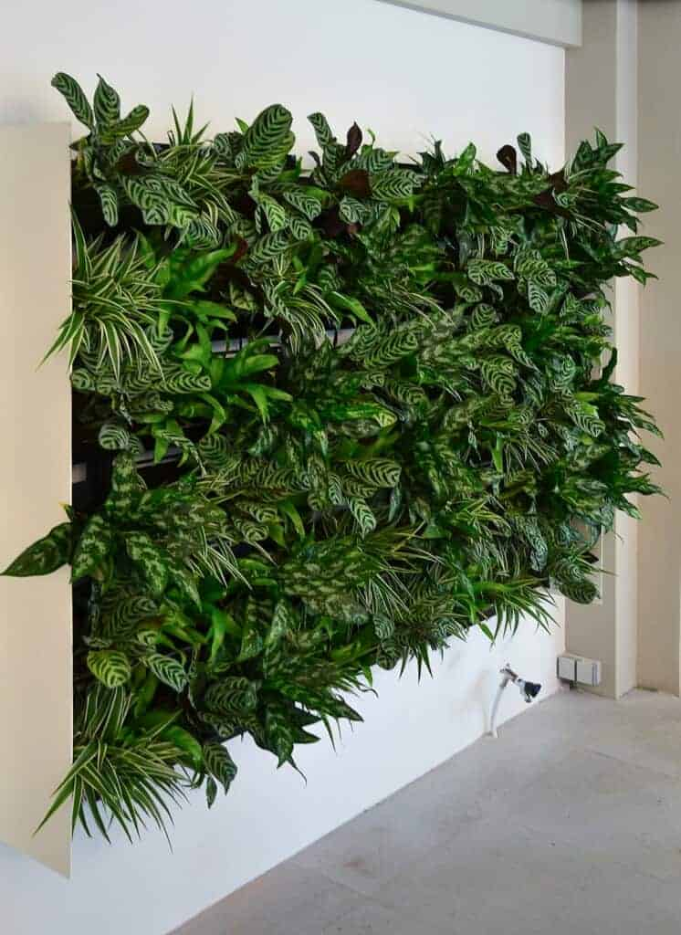 Green wall--live plant wall example