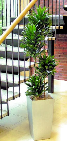 a compacta plant near a staircase in a watertown massachusetts office