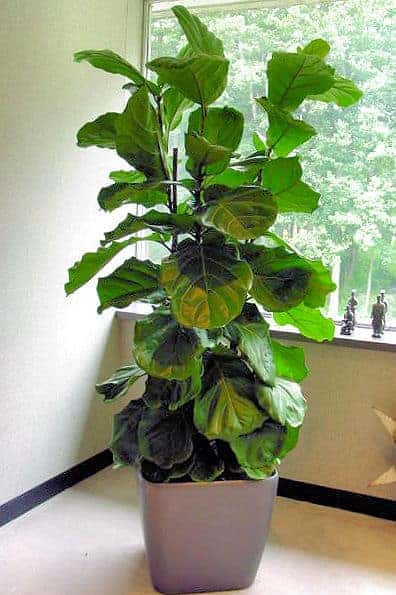 EnviroGreenery Office Plant Service