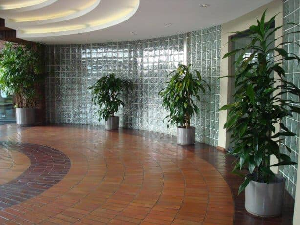 Marlborough - Interior plant services