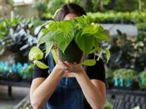 free replacement plants at envirogreenery with maintenance program