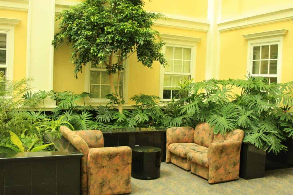 a trio of plants in a lobby