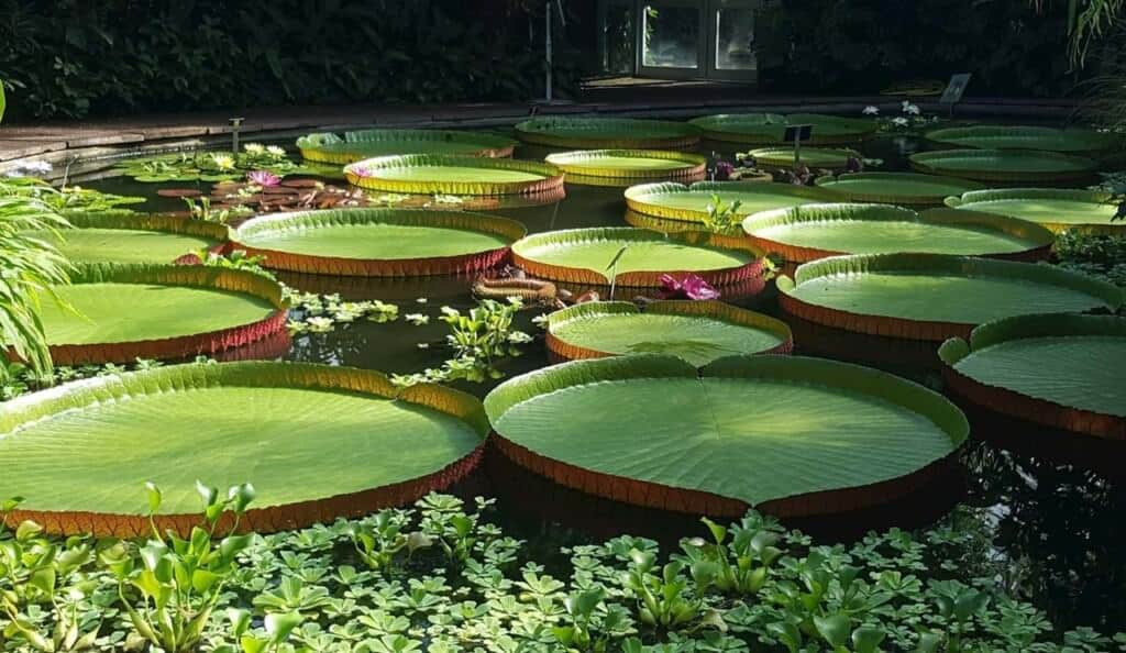 Royal Botanic Garden Edinburgh - Botanical garden